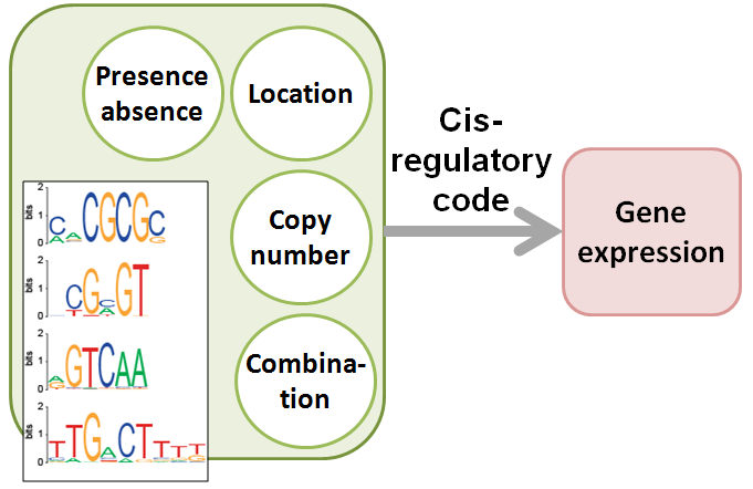 "What is the ""regulatory code"" of plant gene expression"